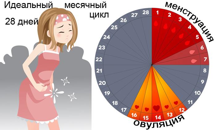 28 дней - идеальный менструальный цикл женщины