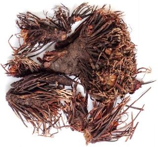 сухой корень красной щетки